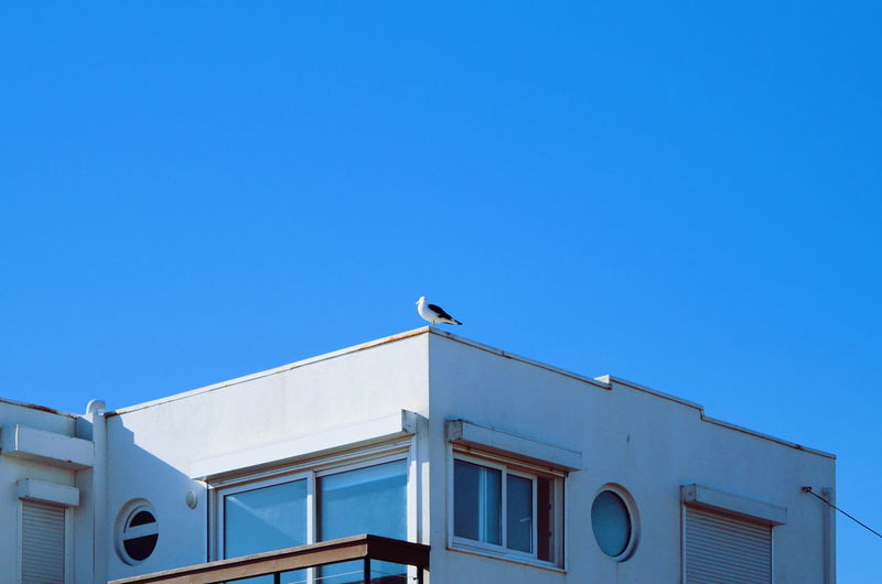 Low angle view of bird perching on building against clear blue sky