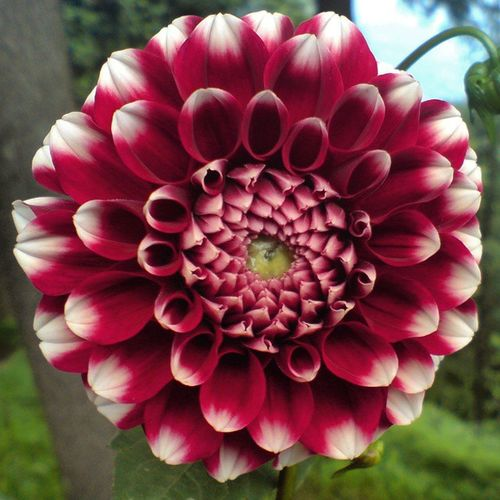 Flowerstalking Floweraffair Flower_pinks Features4all rsa_nature_flowers rsa_flower treasures_and_nature tr_colors ir_flowers ip_blossoms ptk_flower picture_to_keep global_nature_pinks specialpicture_flowers splendid_flowers shot_flair zoomthelife color_n_nature club_nature bestnatureshot_flower bombayflare bns_flowers nature_sultans naturehippys_ nature
