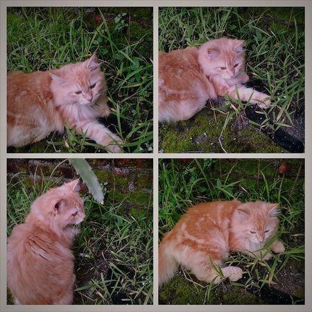 Caturday Catoftheday Cat Lovers Cat Cats Cat♡ Catsofinstagram Catsagram Angora Angoracat