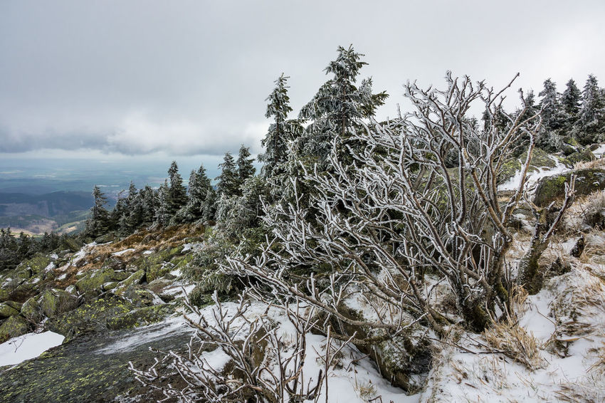Landscape in the Harz area, Germany. Relaxing Trees Winter Brocken Cold Temperature Day Harz Journey Landscape Mountains Nature No People Outdoors Rocks Saxony Anhalt Snow Tourism Travel Destinations Vacation