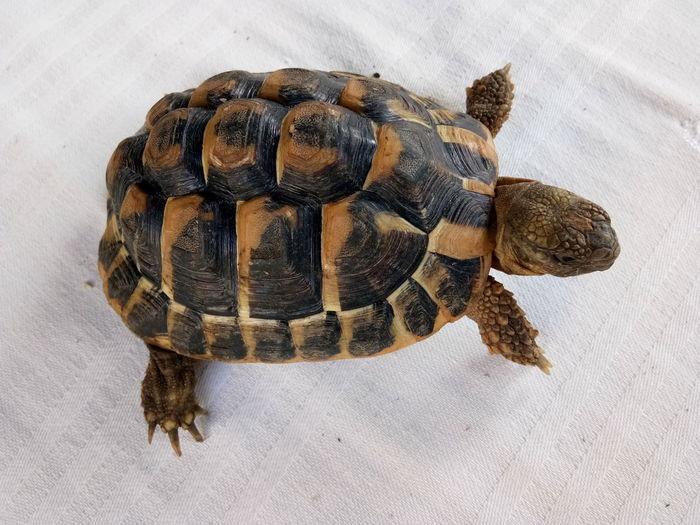 EyeEm Selects Tortoise Shell Tortoise Reptile Close-up Animal Themes Sea Turtle Turtle Sea Life
