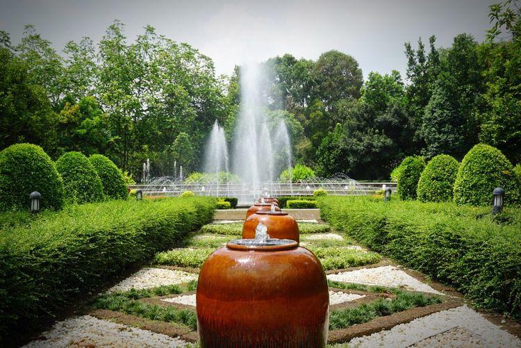 Botanic Garden at Rayong, Thailand Plant Water Tree Nature Spraying Green Color Fountain Outdoors Park Splashing
