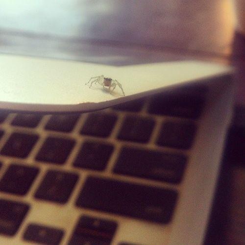 Hey little guy. Jumpingspider Assistant Interacting With Technology Business