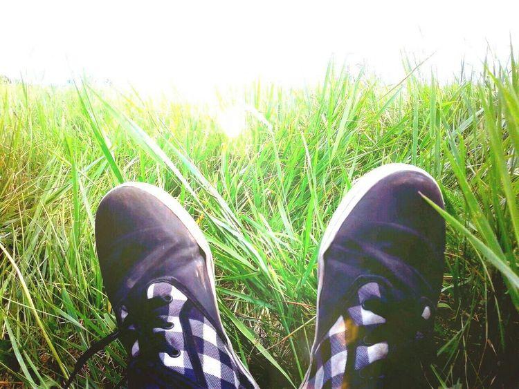 ноги трава кроссовки обувь Природа Green Color солнце