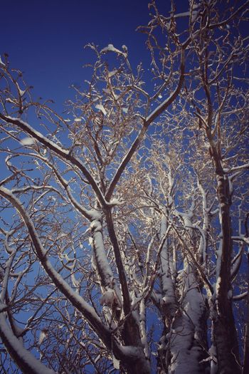 Wood Snow Winter Tree Snowy Tree Low Angle View Sky Blue Sky Day Beauty In Nature Nature Flower Close-up
