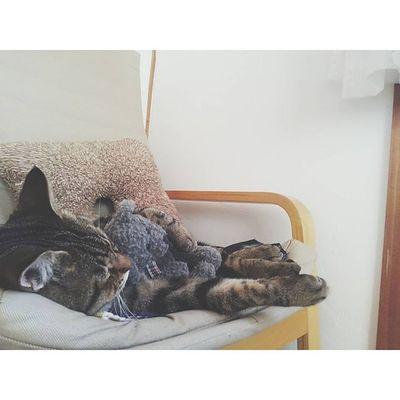 金太郎、くまのぬいぐるみを抱きしめてお昼寝中...🐻 . . 息子がポンッと置いてたぬいぐるみ。 それをまさかハグするなんて♡🐱 . 猫 猫さんとの生活 ねこ部 にゃんだふるらいふ にゃんこネコ金太郎男の子 kintarouig_cat cat_stagram animals_ world_kawaii_cat animal_stagram