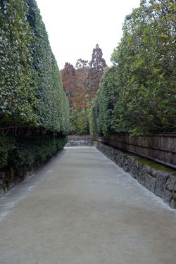 Architecture Beauty In Nature Built Structure Clear Sky Day Diminishing Perspective Direction Footpath Garden Green Color Growth Hedge Kyoto,japan Nature No People Outdoors Plant Sky The Way Forward Tranquility Tree vanishing point