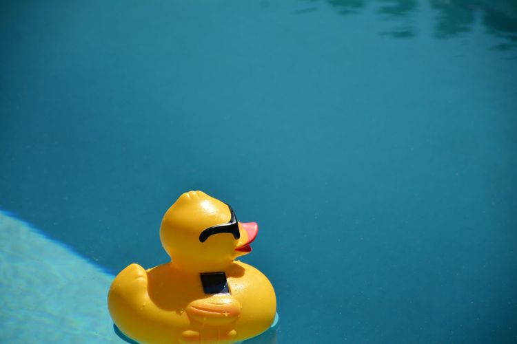 High angle view of yellow rubber duck floating on swimming pool