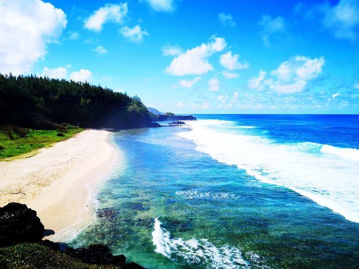Tree Sea Wave