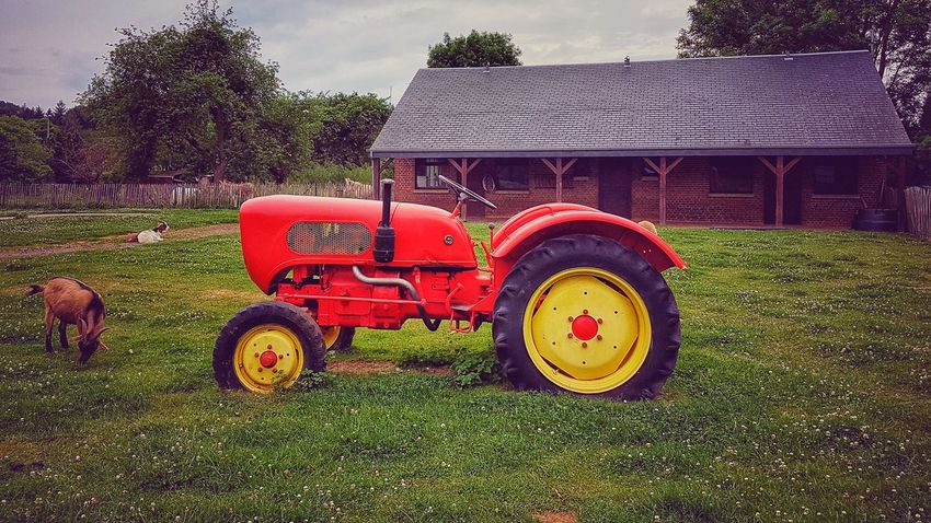 Agriculture Tractor Field Rural Scene Agricultural Machinery Farm Life Domestic Animals