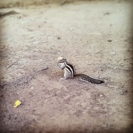 Chasing this creature is so Enthusiastic😊 , Run Fun💕 , Creative😊 and Tiresome  😨 😜 Love squirrels. ☺