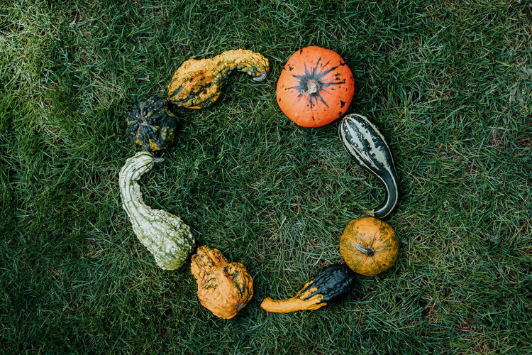 High Angle View Of Pumpkins On Grassy Field