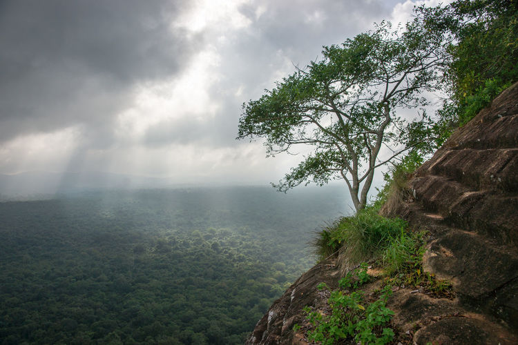 Beauty In Nature Cloud - Sky Mountain Nature Outdoors Scenics Sigiriya Sigiriya Rock Sky SriLanka Tree