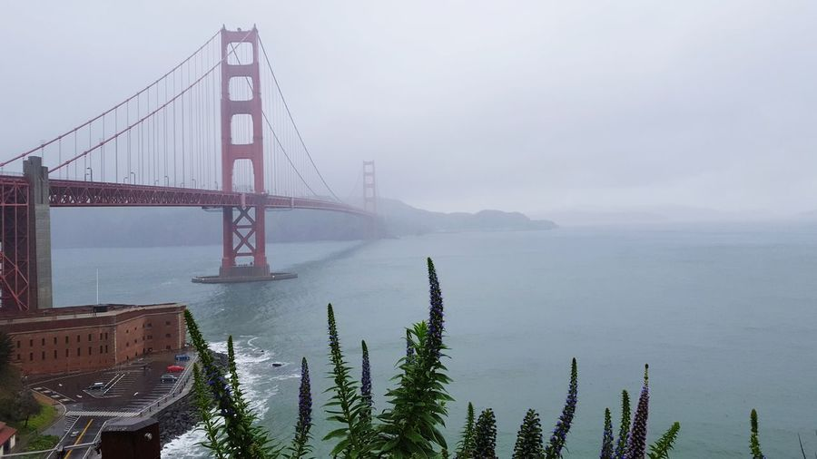 Misty SF SF San Francisco California Golden Gate Bridge City Cityscape Urban Skyline Water Fog Skyscraper Tree Photography Themes Suspension Bridge Bridge - Man Made Structure Overcast Dramatic Sky Foggy Storm Cloud Mist