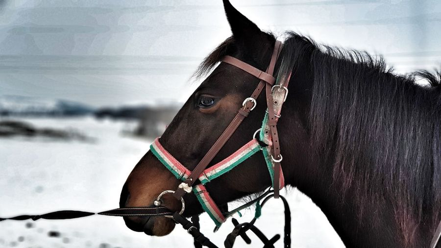 Kedi #horse #horselover Adult Domestic Animals Business One Animal Outdoors Day One Person People Mammal Close-up