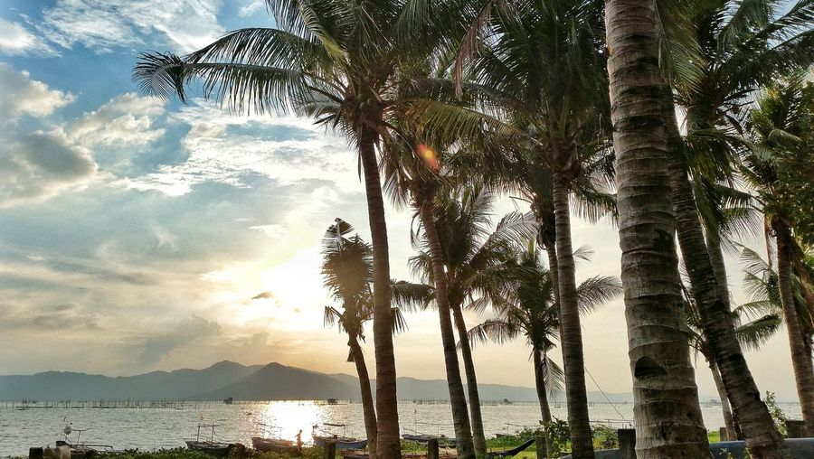 Coconut Coconut Palm Tree Sky Nature Tree Beauty In Nature Sunlight Backgrounds No People Sunset Growth Outdoors Cloud - Sky Day Boat Mountain Talim Island Philippines Rizal Philippines Jalajala Beauty In Nature Nature Beach Water Nautical Vessel