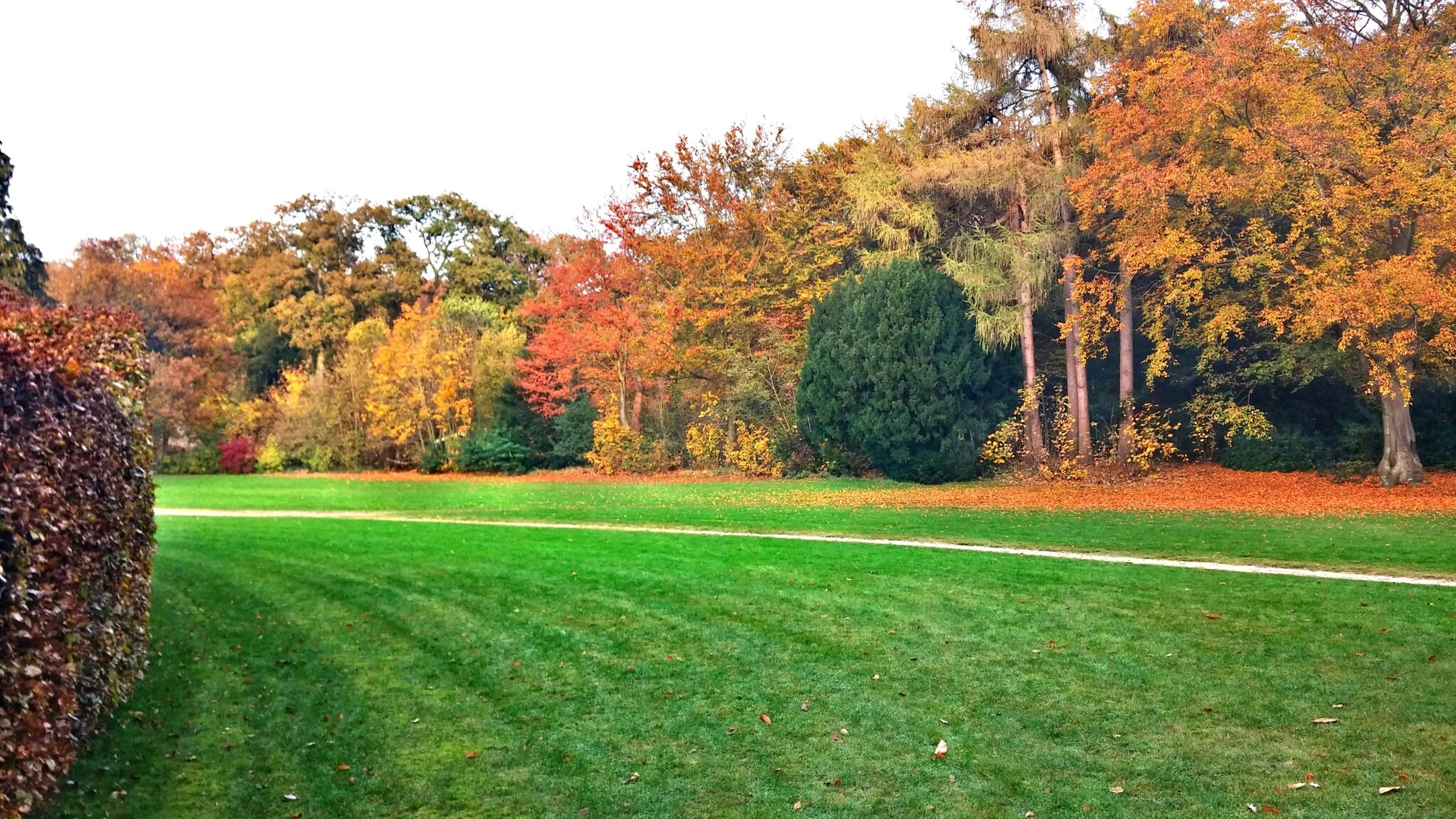 tree, grass, tranquility, autumn, tranquil scene, field, landscape, beauty in nature, clear sky, scenics, grassy, nature, growth, change, park - man made space, green color, season, park, idyllic, orange color