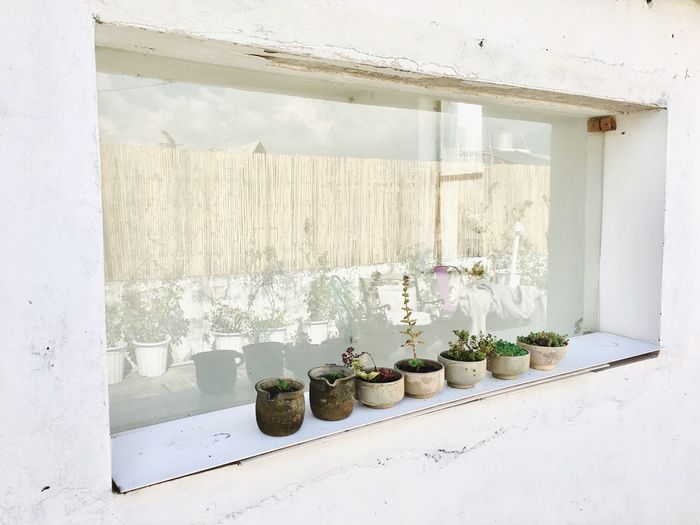 Flower vase on window