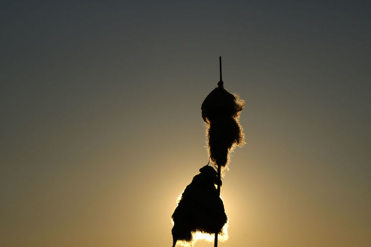 Silhouette lizard against sky during sunset
