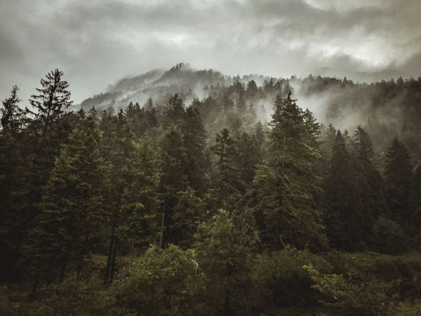Moody Nature :) Estergebirge Farchant Wettersteingebirge Bayern Tree Plant Growth Sky Forest Beauty In Nature Land Nature Cloud - Sky Tranquil Scene No People Tranquility Pine Tree Scenics - Nature
