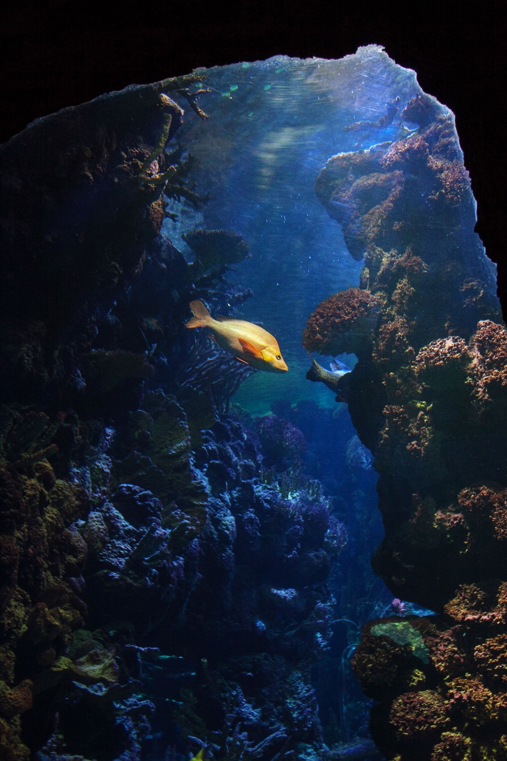 water, underwater, undersea, beauty in nature, rock - object, nature, rock formation, sea, sea life, fish, scenics, tranquility, high angle view, transparent, geology, no people, swimming, coral, tranquil scene, blue