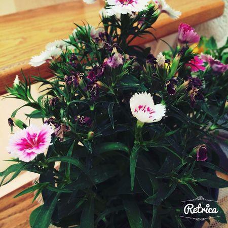 Flor ?? ??❤️✌️ Flower Hugging A Tree Popular Photos