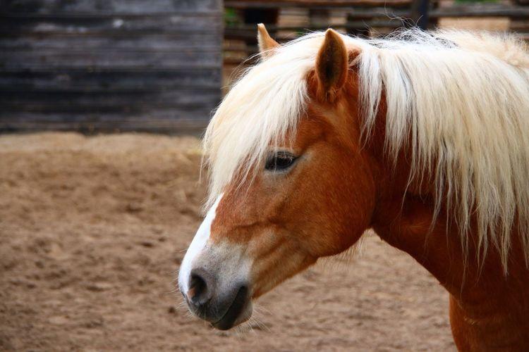 Animals Horse Horses Animal Pferde Pferd Pferdekopf