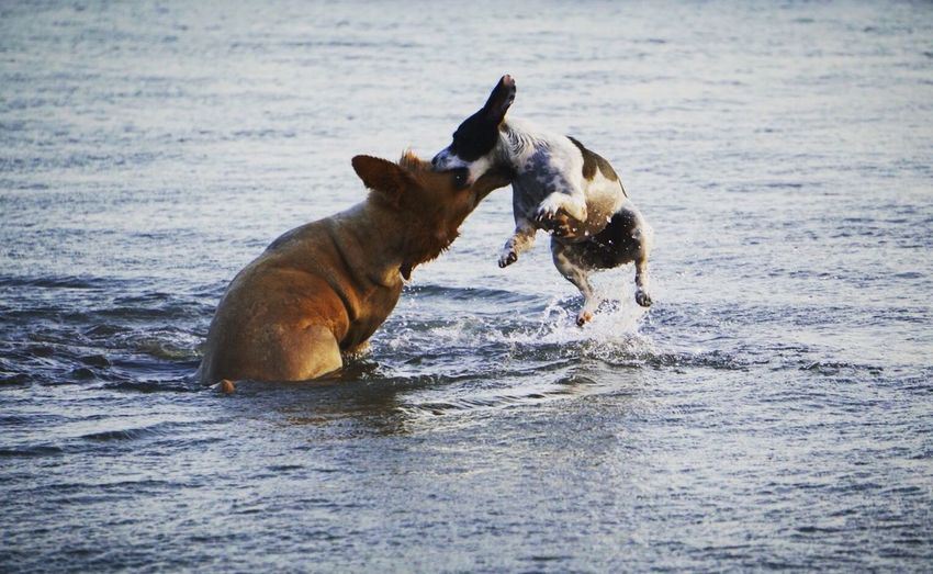 A dogfight in