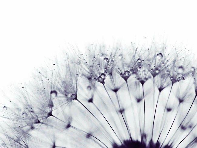 綿毛っっ♪ Nature Beautiful Macro Photo