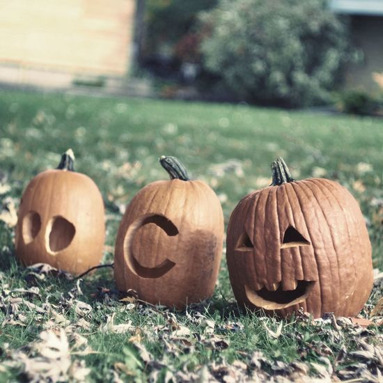 Happy Halloween🎃 Halloween Pumpkin Jack O Lantern Nature Outdoors Sunlight Pumpkin Carving