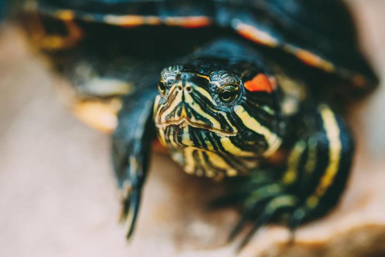 Extreme close-up of tortoise