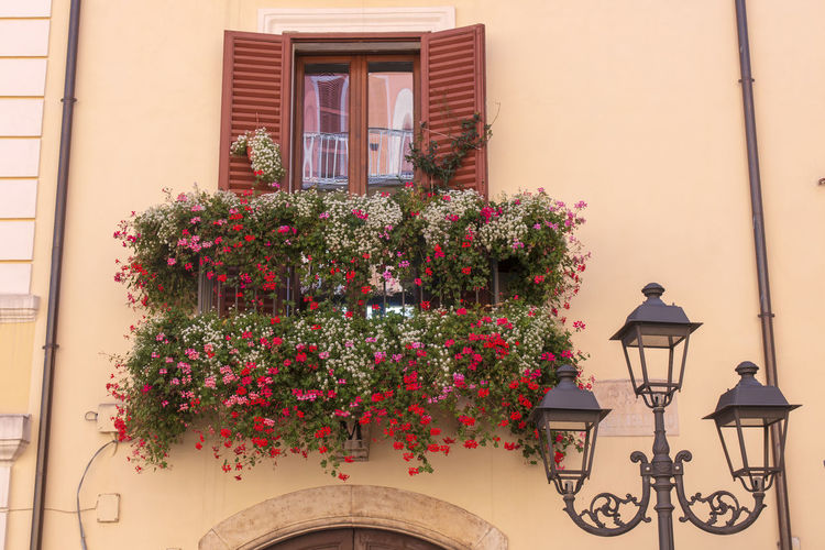 Flower pots on window of building