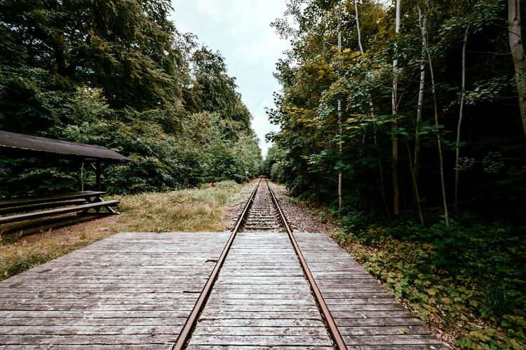 Railroad track amidst trees