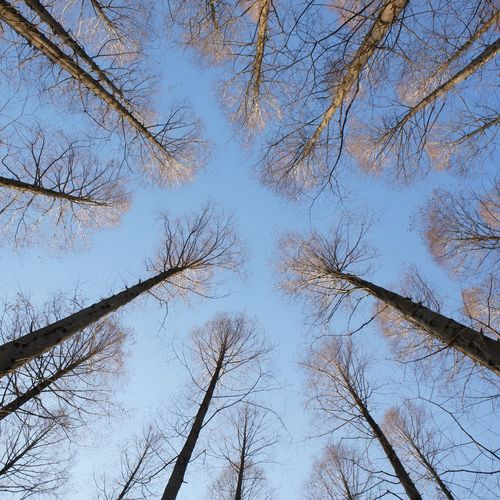 Nature Beauty In Nature Trees And Sky Metasequoia Sky Nature_collection Branch Tranquility Nature Photography Naturelovers Mizumoto Tokyo Japan