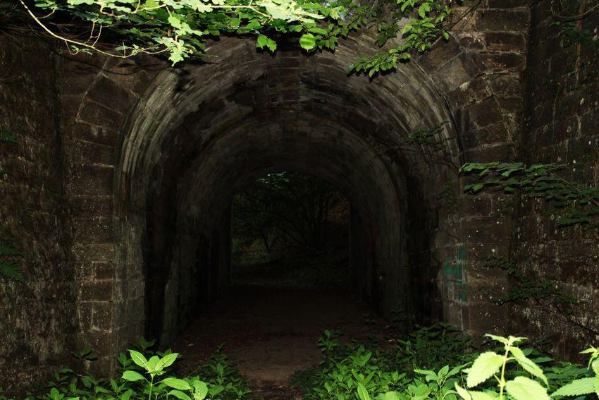 Melancholy Gloomy Dark Underground Passage Underground Walkway Underground Arch Plant Day Architecture Leaf Built Structure Growth No People The Way Forward Nature Outdoors