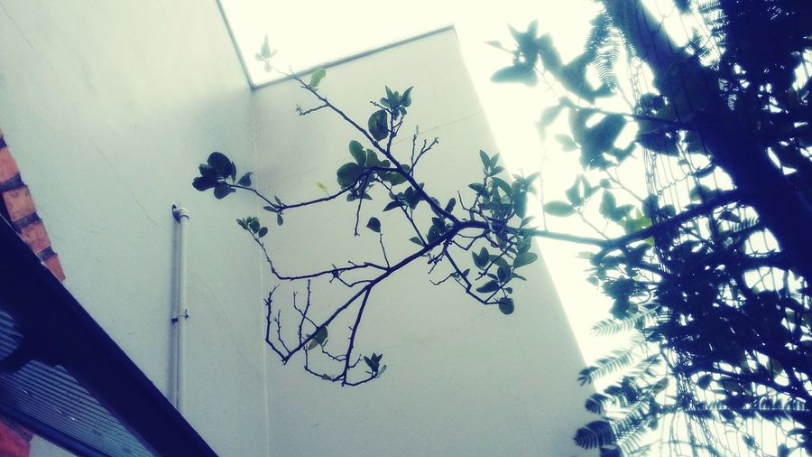 Tree Plant Nature No People Sky Day Greenhouse Arts Culture And Entertainment The City Light Tree Beauty In Nature Animals In The Wild Animal Themes Plant Nature Black Color