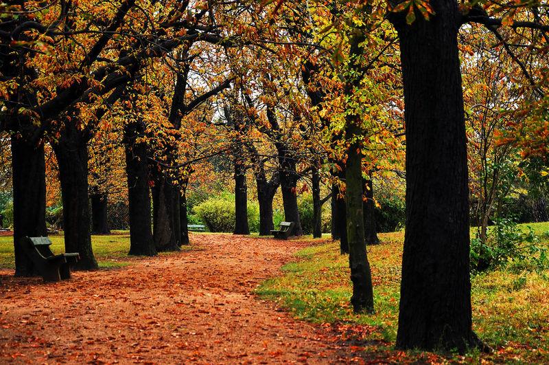 Autumn mood in