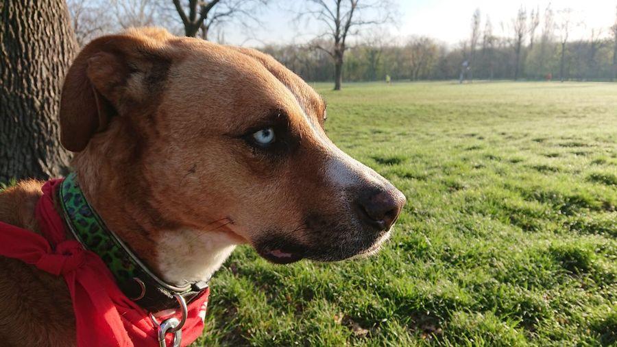 Dog Life Gazing