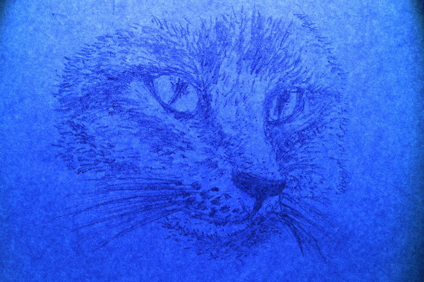 The face of cat wrote by pencil on white paper in blue light Diamond Eyes  Nature Rat Textures Animal Biology Black And White Blue Cat Close-up Cute Day Fur Human Body Part Ideas Long Mustache Long Tail Microscope Slide Nature Paper Pencil Drawing People Portrait Science Texture