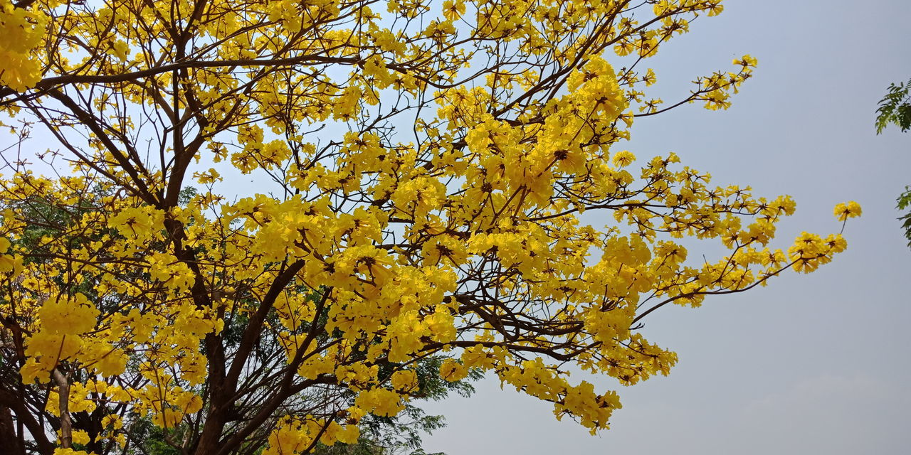 Tree Branch Yellow Sky Close-up