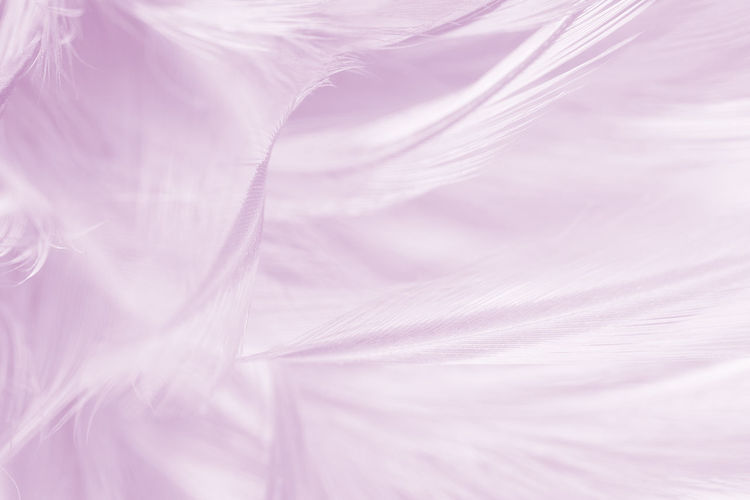 Backgrounds Full Frame Pink Color No People Abstract Abstract Backgrounds Textile Textured  White Color Flower Rippled Softness Silk Plant Fragility Vulnerability  Nature Swirl Elégance Purple Textured Effect Lightweight Luxury