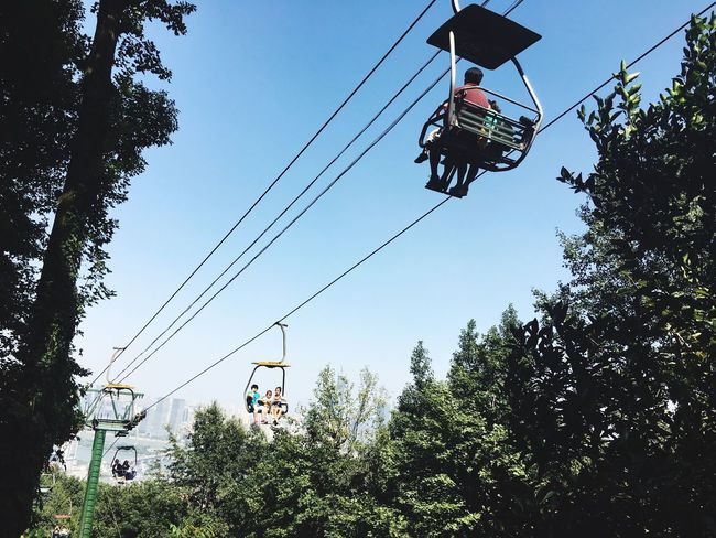 Tree Low Angle View Cable Sky Mode Of Transport Electricity  Transportation Outdoors Overhead Cable Car Power Supply Connection Ski Lift Nature Electricity Pylon Day No People
