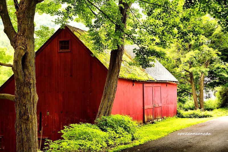 Red Barn Redbarn Farm Hudsonvalley Pawling Upstate New York Trees A Walk In The Woods Red