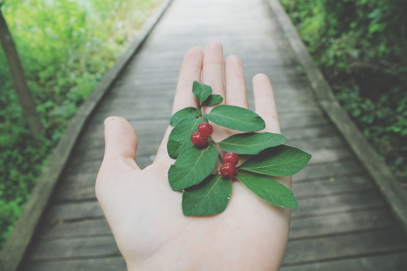 Pathway Leaves Red Berries Hand Walkway Nature_collection Nature Nature Photography Naturelovers