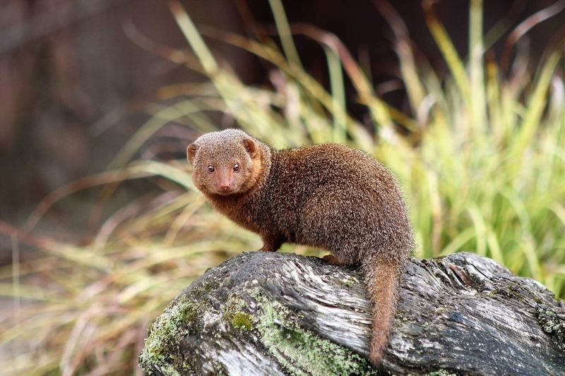 One Animal Animals In The Wild Animal Wildlife Animal Themes Nature Outdoors No People Mammal Day Full Length Close-up Tree Mongoose