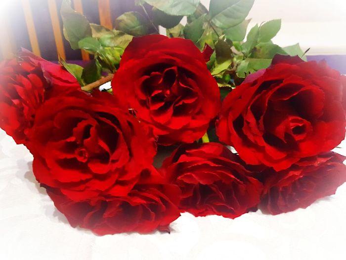 Red Rose -