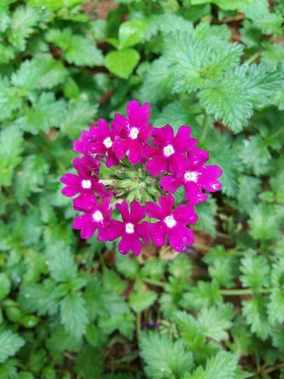 Sou uma flor de Sarom, um lírio dos vales. Como um lírio entre os espinhos é a minha amada entre as jovens. Cânticos 2:1-2 First Eyeem Photo