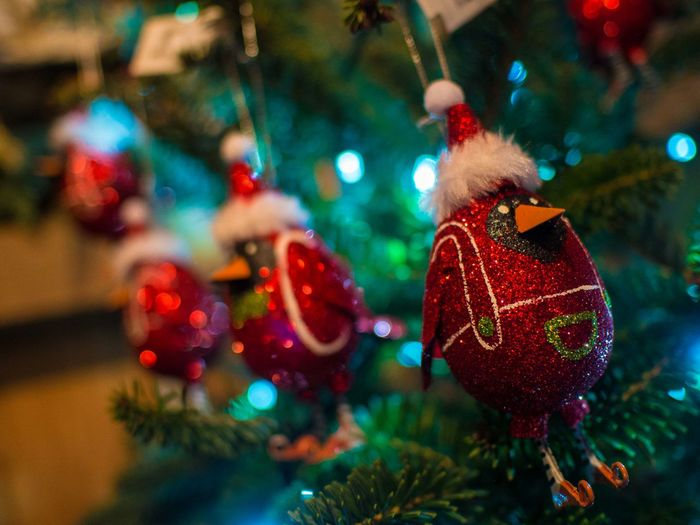Arts Culture And Entertainment Celebration Christmas Christmas Decorations Christmas Tree Close-up Colorful Cultures Decoration Detail Drop Focus On Foreground Fragility Full Frame Fun Glowing Happy Holidays! Holding Merry Christmas! Multi Colored Music Red Selective Focus Tradition Wet
