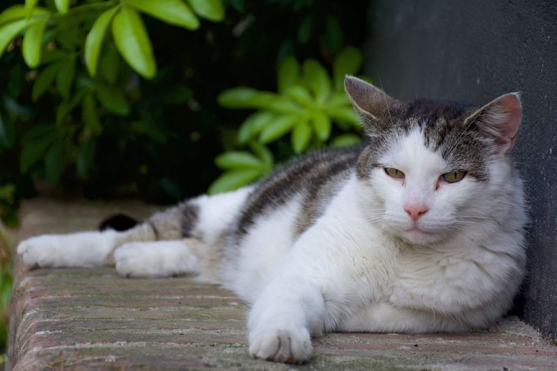 Close-up of cat resting outdoors
