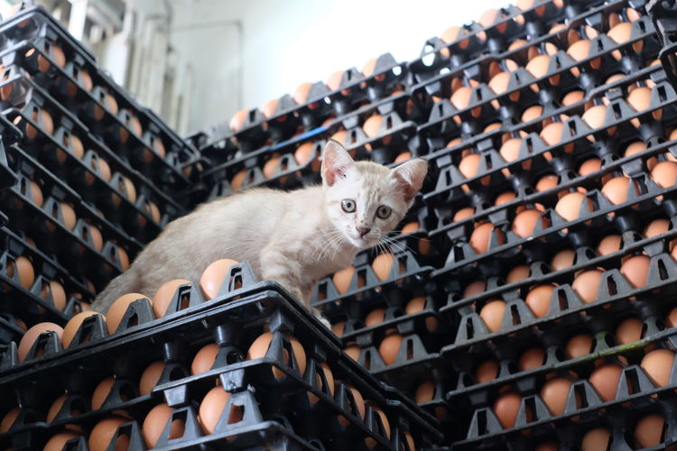 Cat on egg carton stack at store